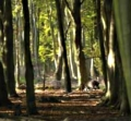 """Photo of the Roumere Forest where """"Cassandra's"""" burnt body was found"""